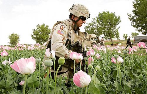 US soldier in poppy field. Source Atlantic Council